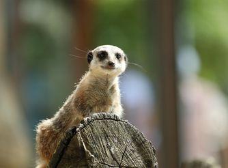 Préparez votre visite - Découvrez nos animaux extraordinaires - ZooParc de Beauval