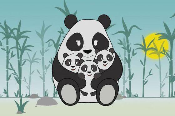 Reproduction des pandas : 3 minutes pour tout comprendre !