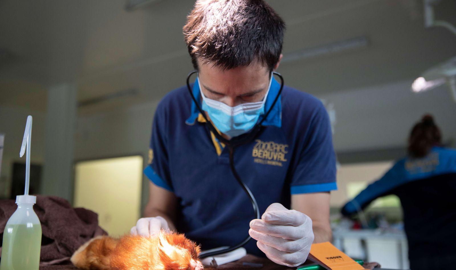 Clinique vétérinaire et centre de recherche - Opération vétérinaire - ZooParc de Beauval