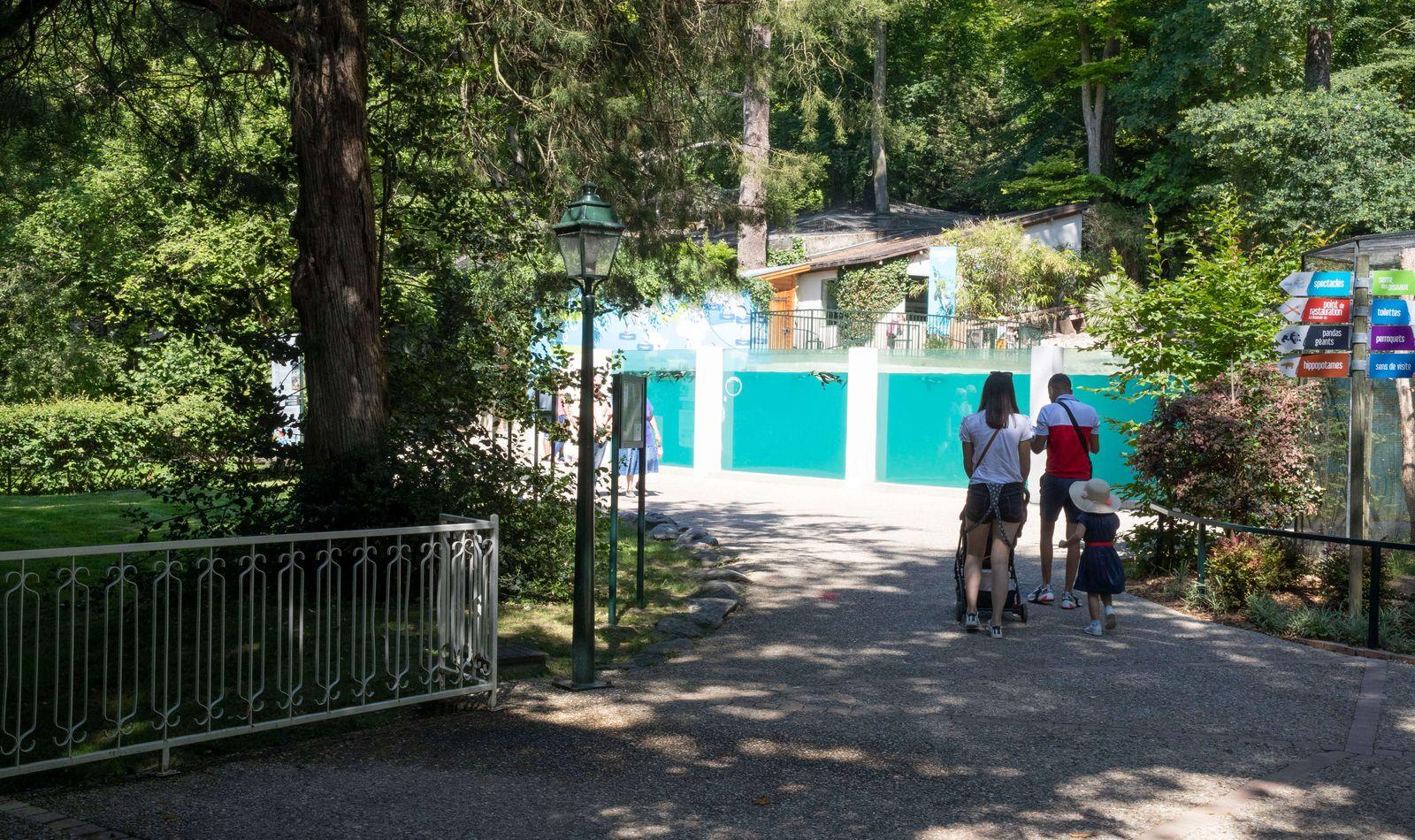 Bassin des manchots - Venez visiter les animaux du ZooParc de Beauval