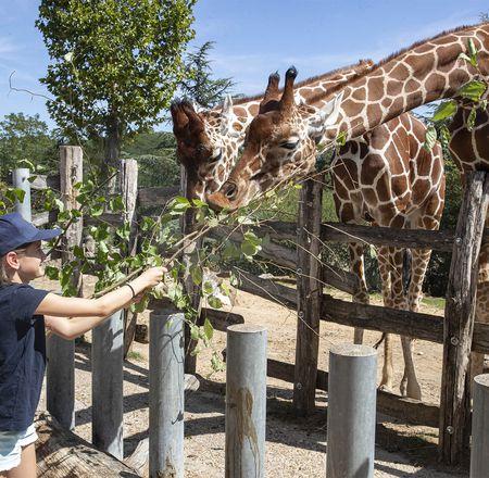 Zoo'Camp