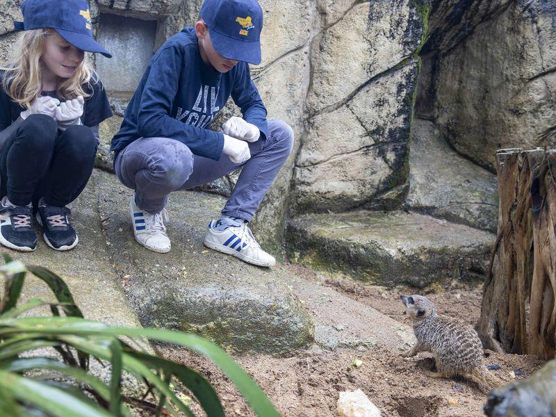S'approcher des suricates - Activité Soigneur d'un Jour junior - ZooParc de Beauval