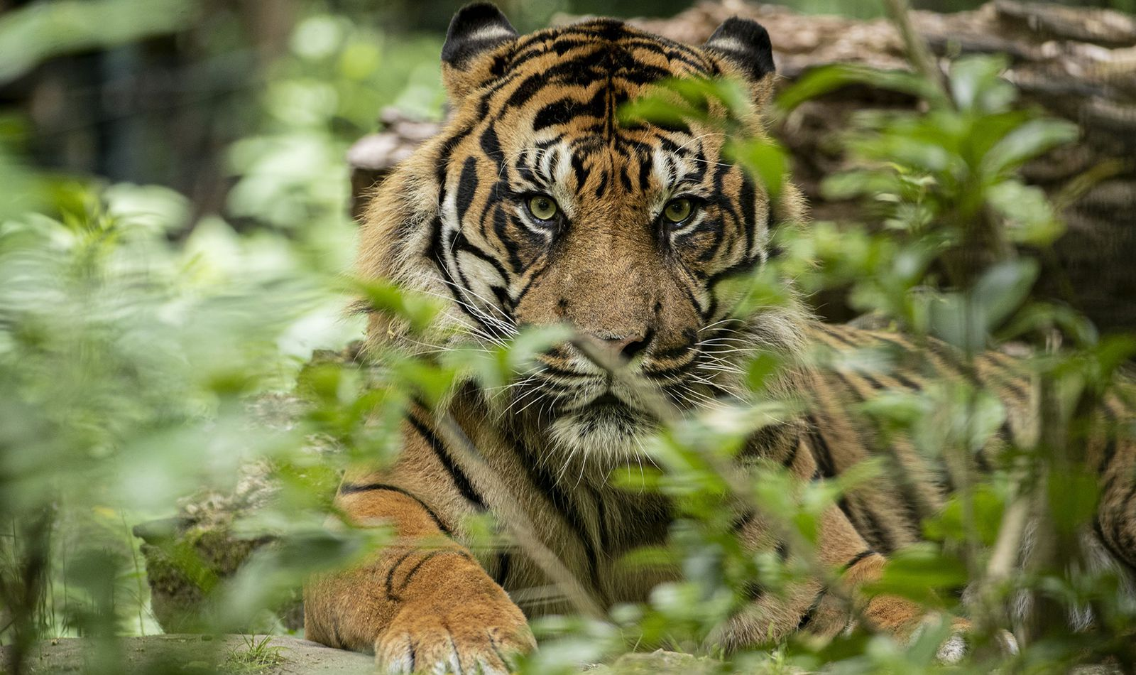 Le Bois des Fauves - Territoire du ZooParc de Beauval
