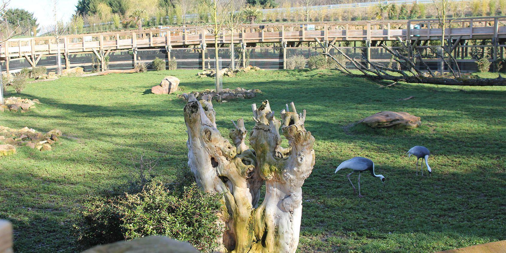 La Plaine Asiatique - Territoire du ZooParc de Beauval
