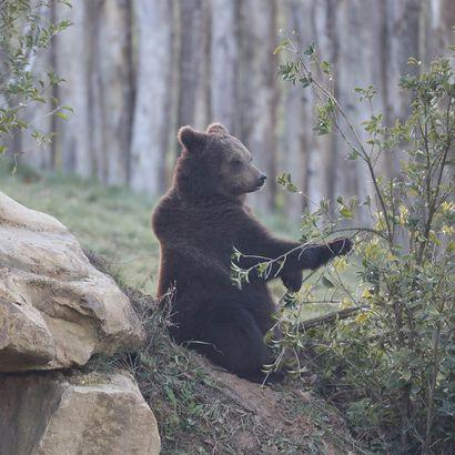 Territoire Nord-Américain - Territoire du ZooParc de Beauval