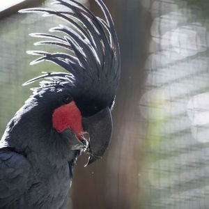 Microglosse - Animaux extraordinaires du ZooParc