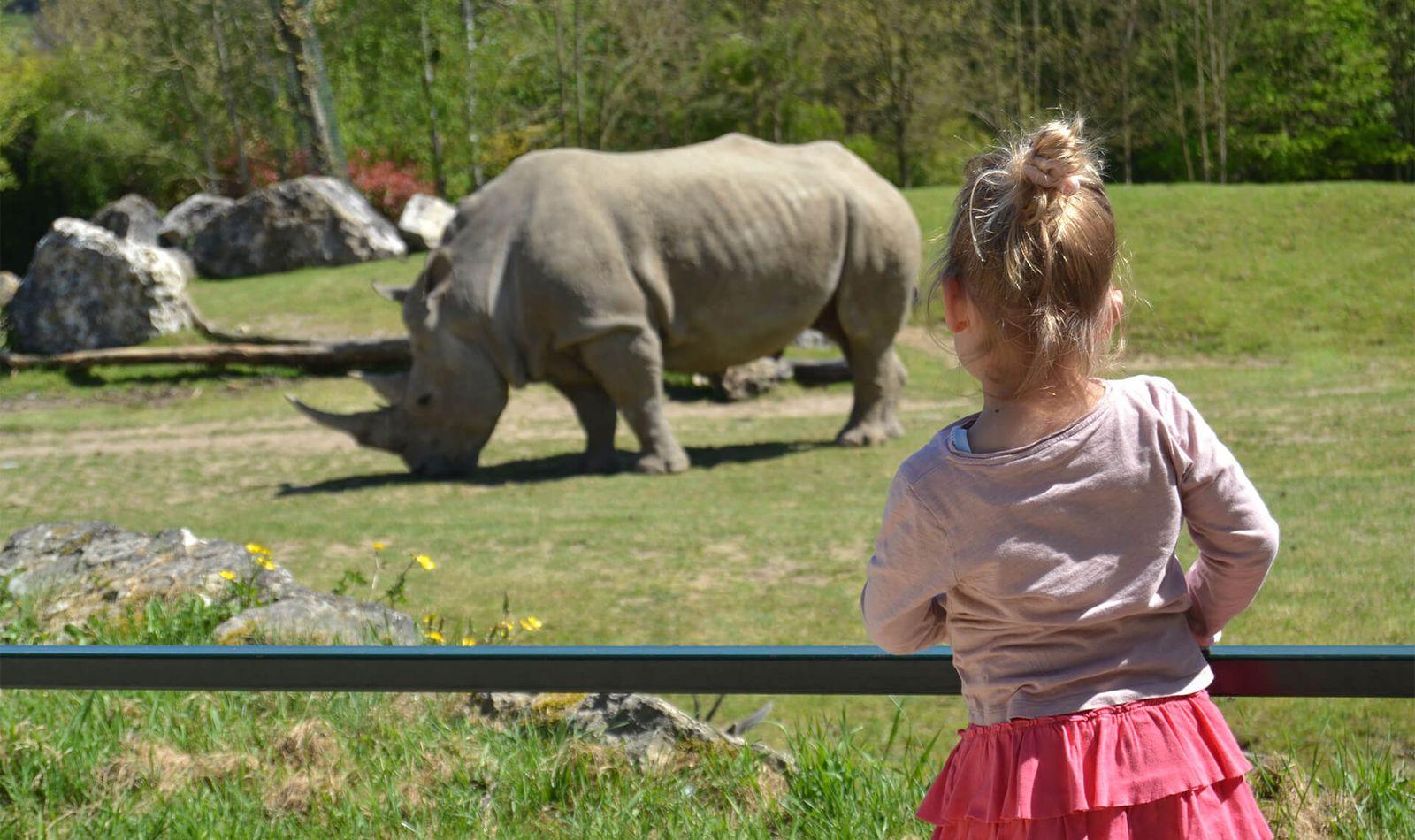 Visiter La Savane Africaine - Rhinocéros Blanc - ZooParc de Beauval