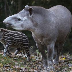 La Pampa Sud-Américaine - Territoire du ZooParc de Beauval