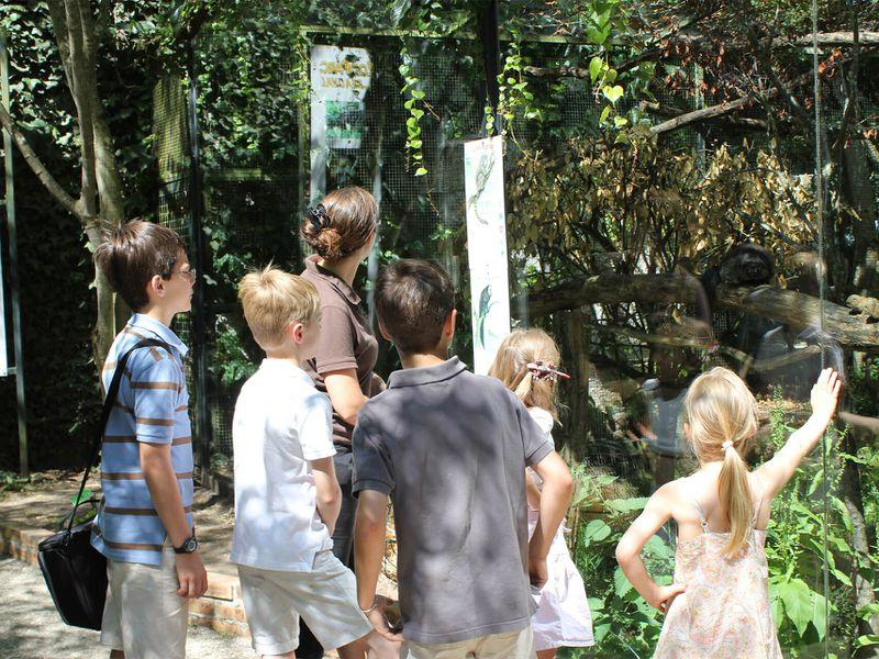 Classes OZO, visite d'écoliers avec médiateur - Activités du ZooParc de Beauval