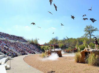 Spectacle d'oiseaux - Les Maîtres des Airs - ZooParc de Beauval