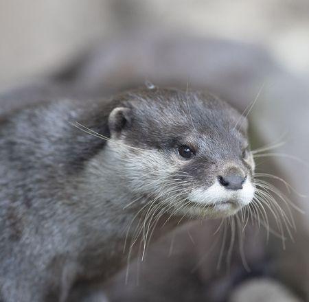 Coatis, loutres et ratons-laveurs - Animation - Activité du ZooParc de Beauval