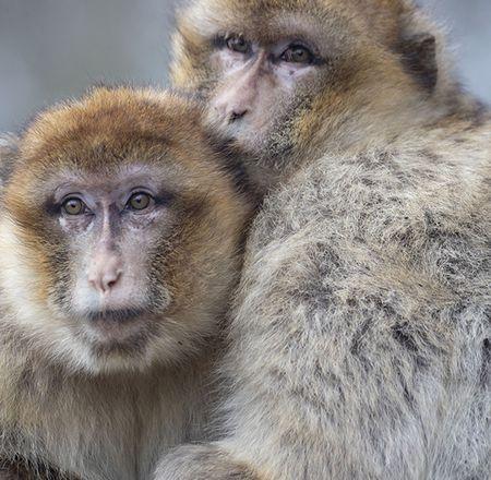 Les particularités des primates - Animation - Activité du ZooParc de Beauval