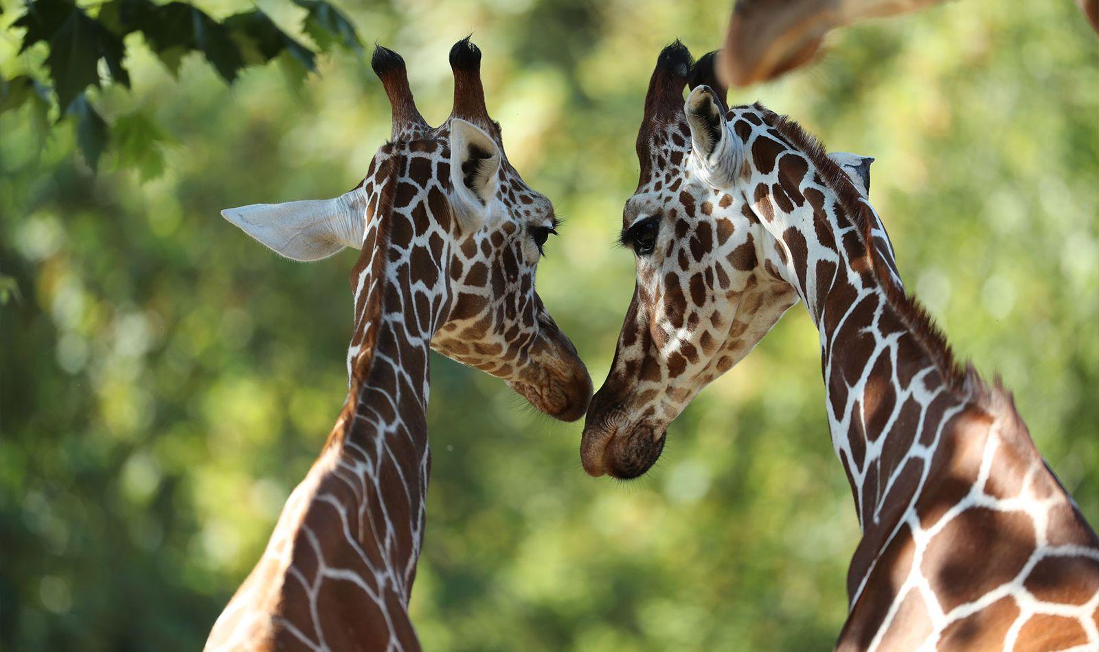 La Savane Africaine - Territoire du ZooParc de Beauval