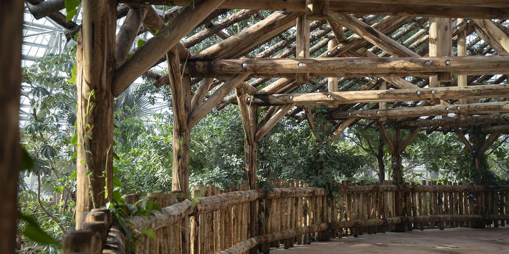 Intérieur Dôme Équatorial - Terrasse - Territoire du ZooParc de Beauval