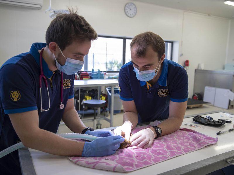 La recherche - L'équipe vétérinaire - ZooParc de Beauval