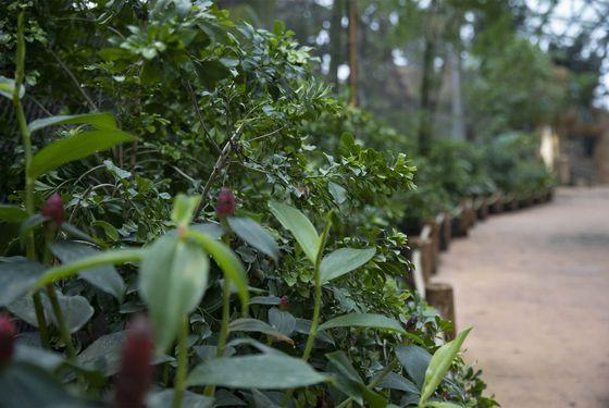 Intérieur Dôme Équatorial - Végétation - Territoire du ZooParc de Beauval