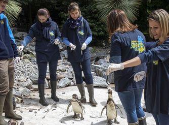 Les activités Premium - ZooParc de Beauval