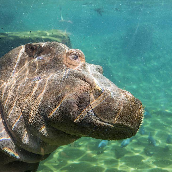 La Réserve des Hippopotames