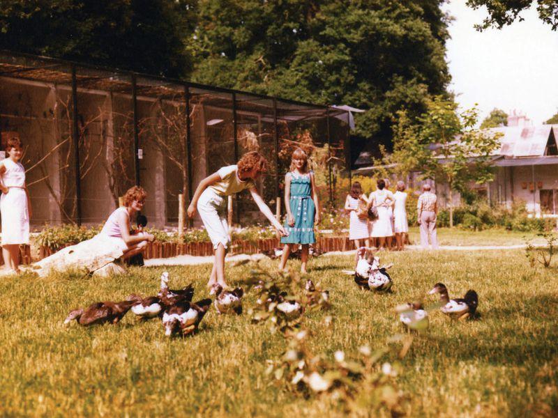 ZooParc dans ses débuts - ZooParc de Beauval