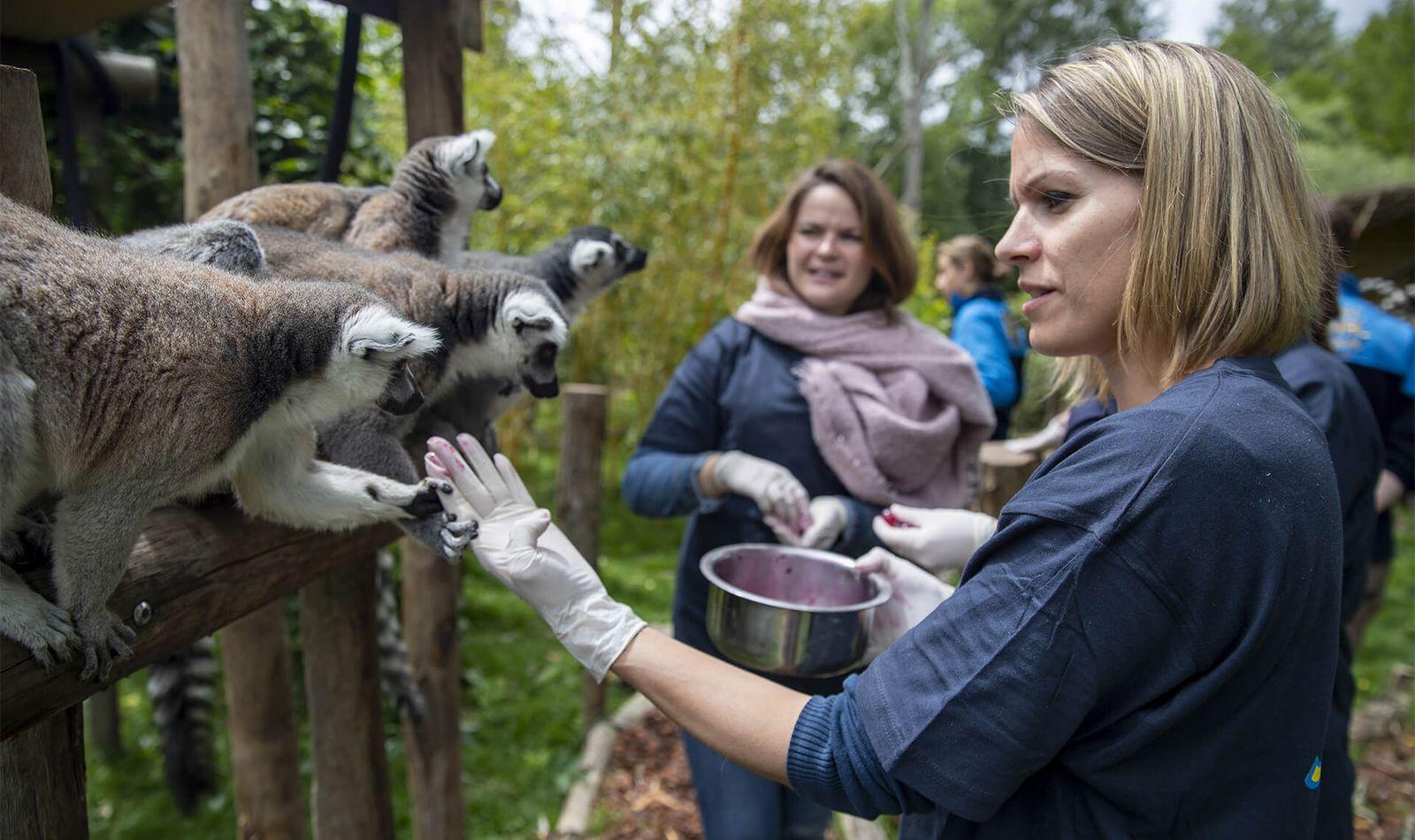 Nourrir les lémuriens - Activité Soigneur d'un Jour - ZooParc de Beauval